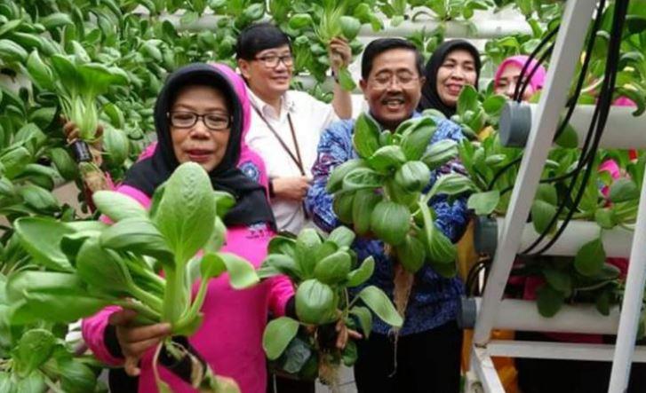 """Photo of Terima Green House, Pemkot Jakut Ingin Warga Tekuni """"Urban Farming"""""""